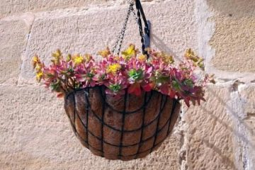 how to hang plants from ceiling without drilling